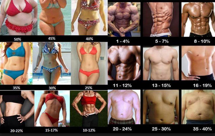 体脂肪率の違いによる見た目の変化